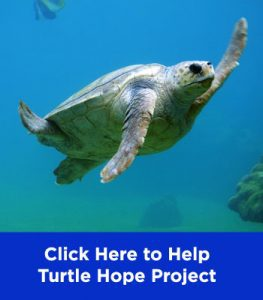 Turtle Hope Project WWF Indonesia