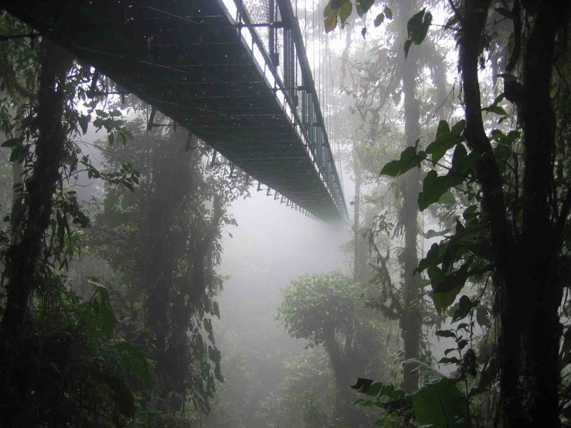 Skywalk at Monteverde Cloud Forest by DirkvdM