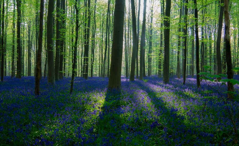 Top 5 Beautiful and Enchanting Forest That Give You Tranquility