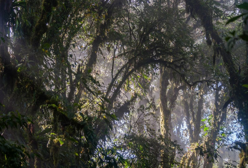 Monteverde Cloud Forest Caroline Granycome Flickr
