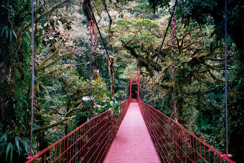 Monteverde Cloud Forest Mike Goren