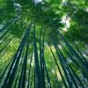 Bamboo Can Be Our Answer To Plastic Pollution, Only If We Want To