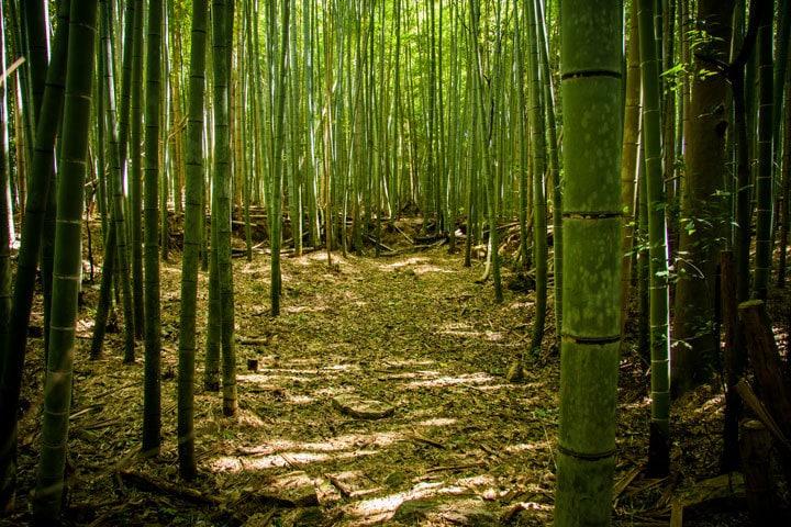 Sagano Bamboo Forest Iñaki Pérez de Albéniz