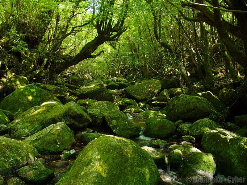 Shiratani Unsuikyo by Hiroaki Kaneko panoramio
