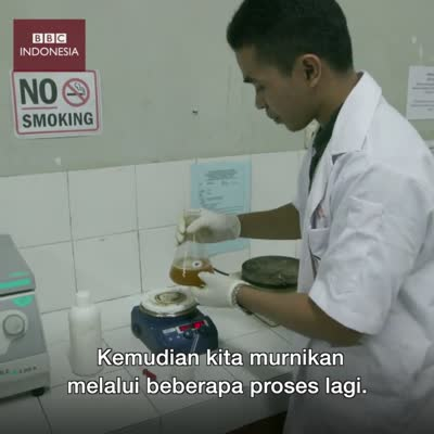 edible-insect-mealworms-oil-video-by-bbc-indonesia-mp4