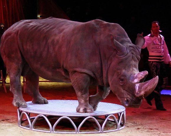Animal Circus (Wikimedia Commons)