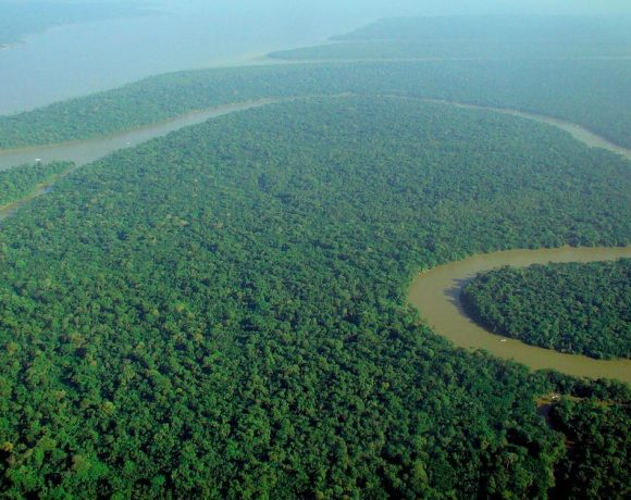 Brazil Rainforest (Wikimedia Commons)
