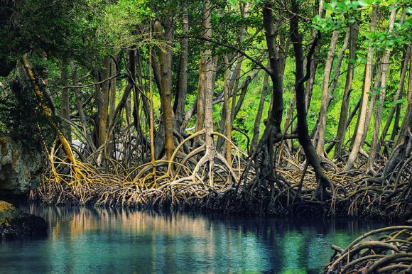 Dominican_republic_Los_Haitises_mangroves by Anton Bielousov