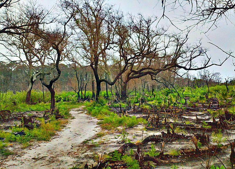 The Amazing Rebirth Of Nature After Death From Wildfire