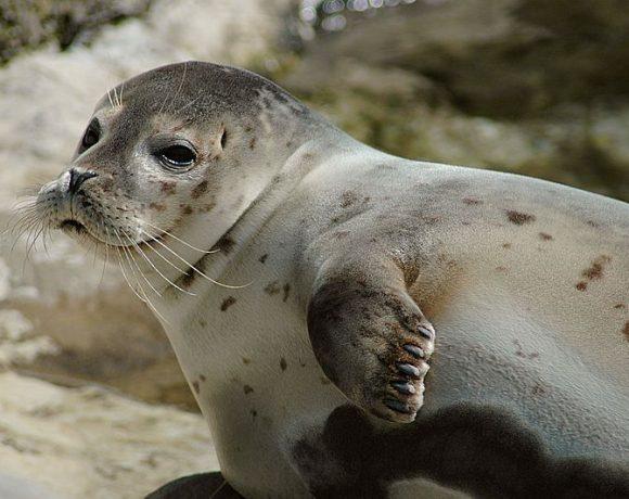 Seal by Marcel Burkhard