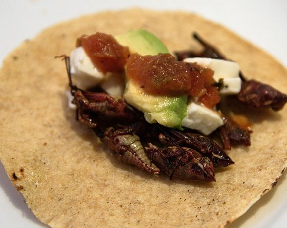 Tacos de Chapulines by Frei sein