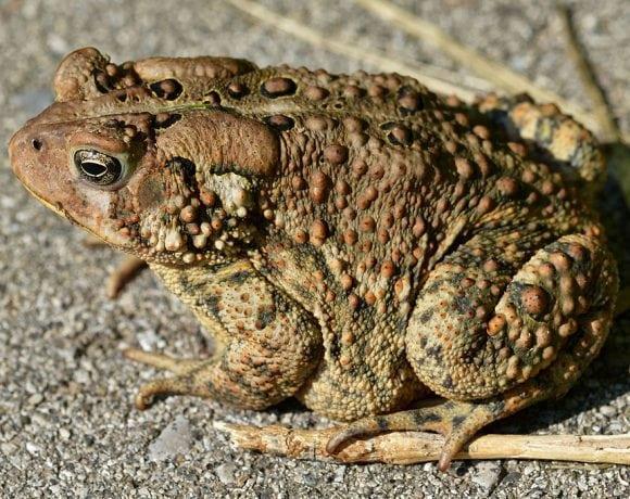 Toad (Ryan Hodnett)