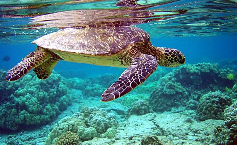 How Plastics Affect Sea Turtles' Lives – They Need Our Help