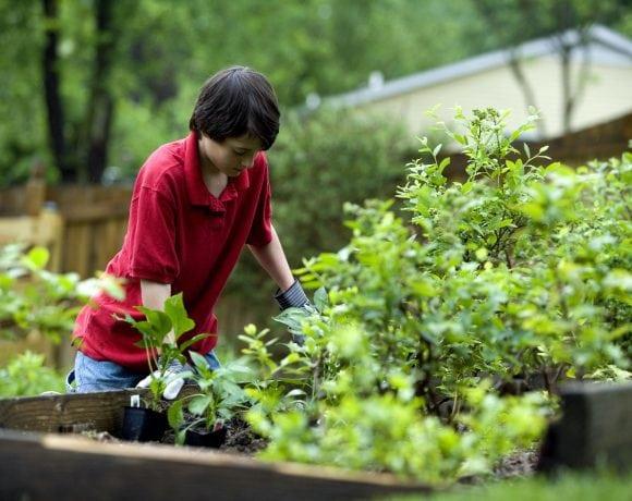 Young boy gardening outdor (Pixnio.com)