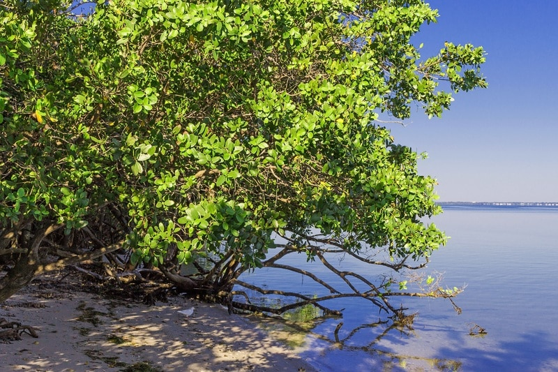 Mangrove Forest: The Unsung Hero