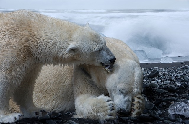 These 5 Animals Suffer The Most Because Of Climate Change