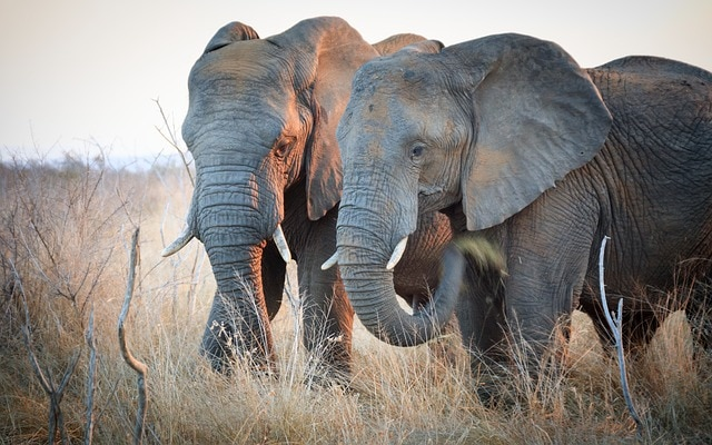 8 Facts About Elephants That Will Touch Your Heart ❤