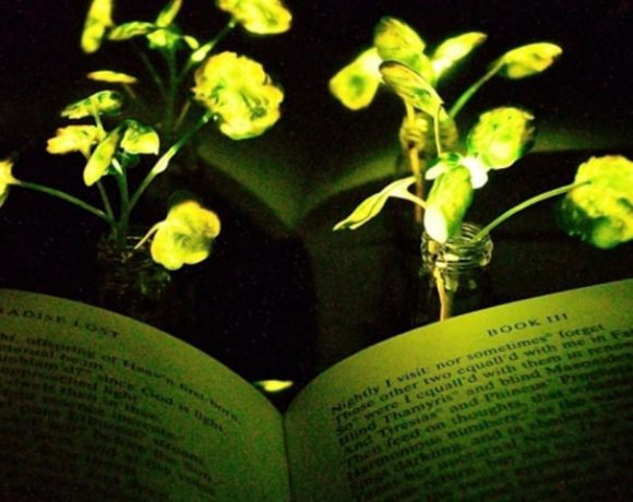 A plant illuminating Paradise Lost (Seon-Yeong Kwak, MIT)