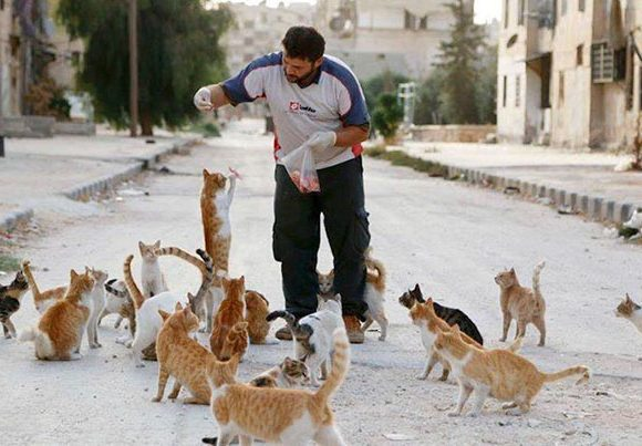 Aljaleel feeding the cats (boredpanda.com)