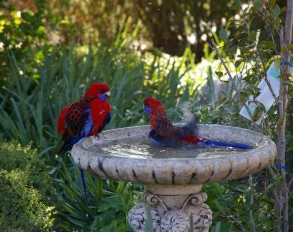 Bird bath by Percita Dittmar