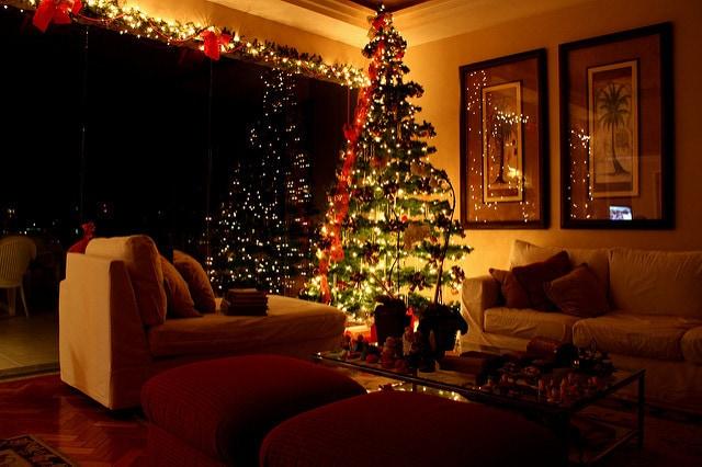 How To Select And Take Care Of Living Christmas Tree
