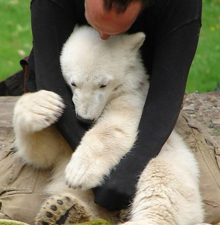 Hugging Polar Bear by Jean-Luc