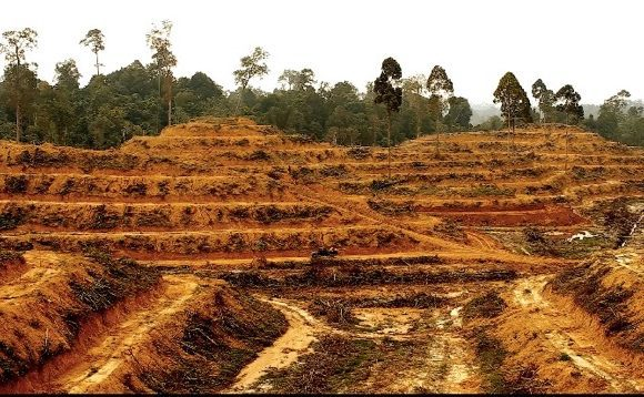 Illegal Deforestation Plantation (Wikimedia Commons)