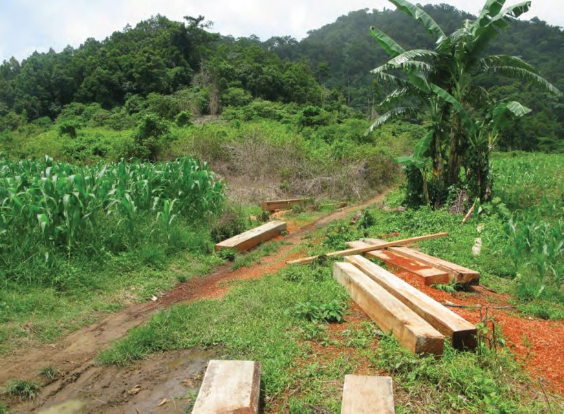 Story From Philippines: Holy War Against Illegal Logging