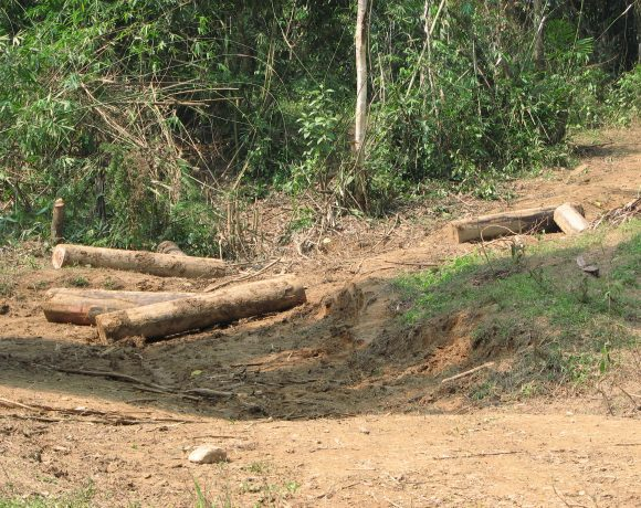 Illegal Logging (Wikimedia Commons)