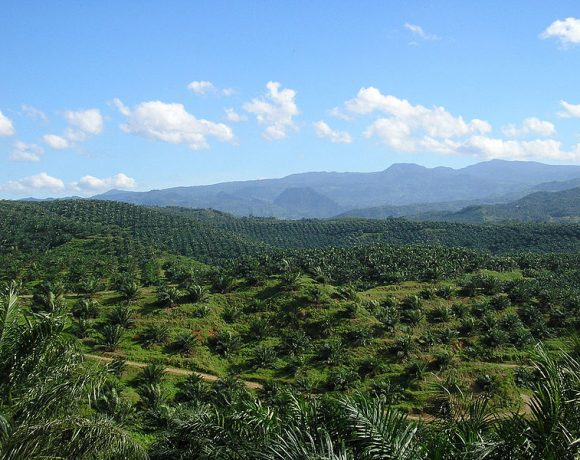 Oil palm plantation by Achmad Rabin Taim
