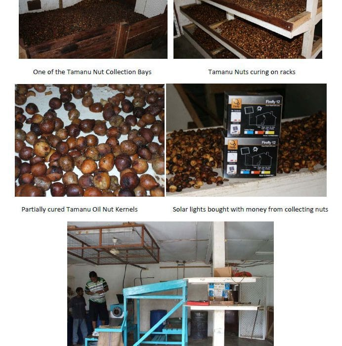 Tamanu Oil Manufacturing Process 2