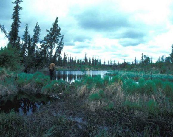 beaver-dam-on-lake