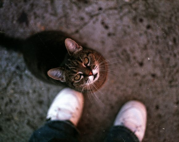 chat-attendant-un-calin