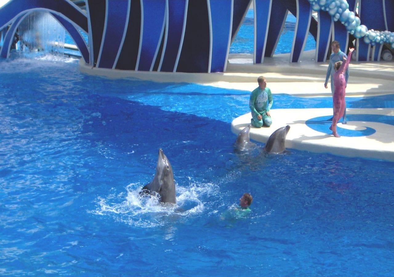 dolphin circus show