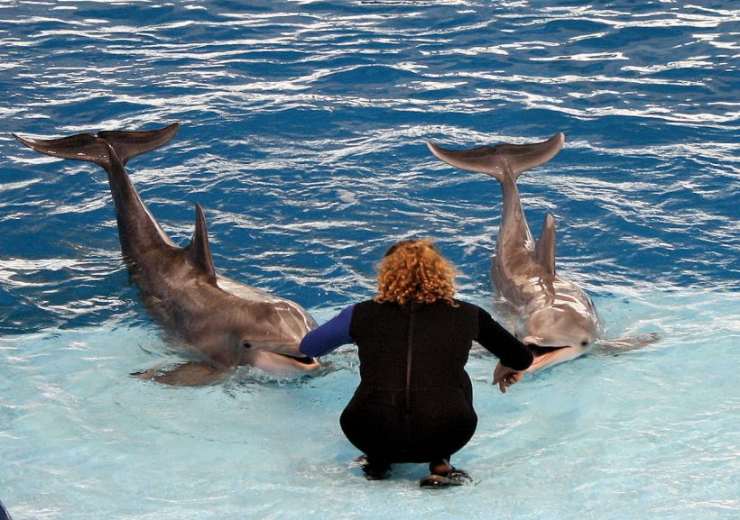 It's Time to Stop: Why You Shouldn't Enjoy Dolphin Circus