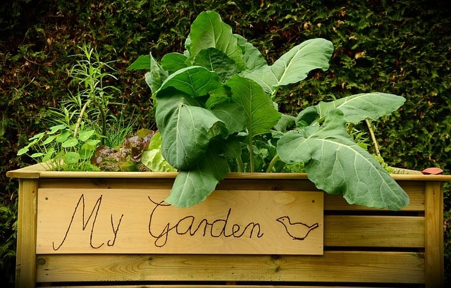 How To Take Advantage Of Natural Symbiotic For Your Garden