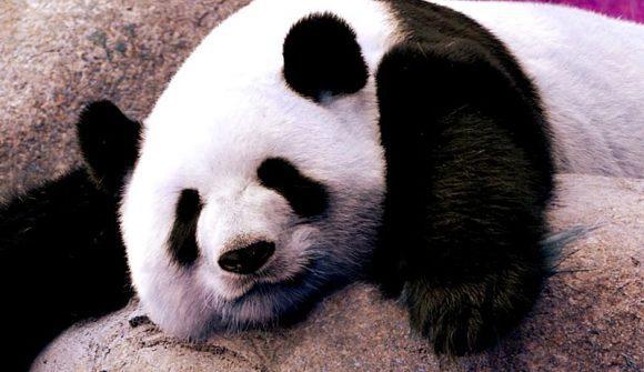 panda by M3rlinux