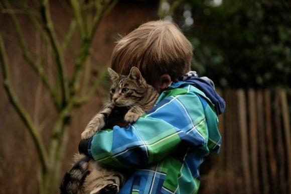 Cat Lover cat owner