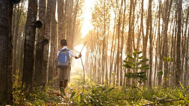Forest School, Educating The Kids To Love Nature And Themselves
