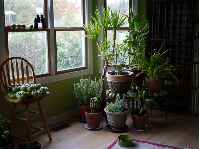Houseplants Will Make Your Home Healthier For You