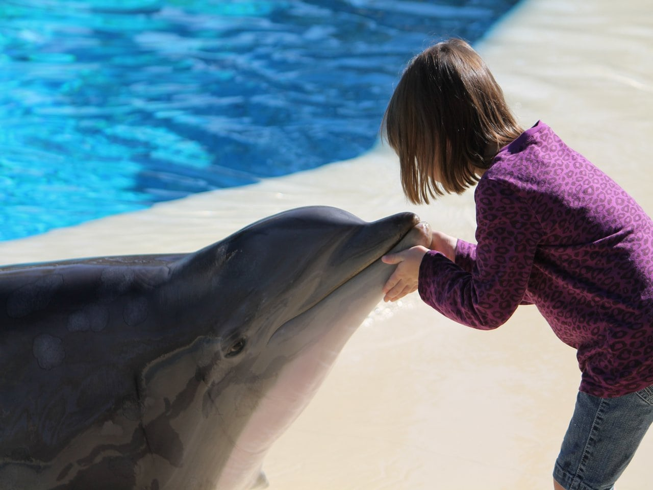 dolphin outside water with a girl