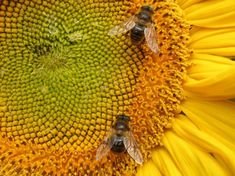 5 Strange Experiments Ever Conducted By Researchers On Bees