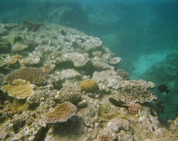 Bleached reef (Wikimedia Commons)