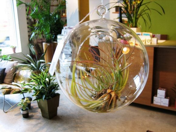 Hanging terrarium by Apartment Therapy