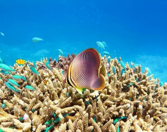 Keeper_Reef,_Great_Barrier_Reef (Wikimedia Commons)
