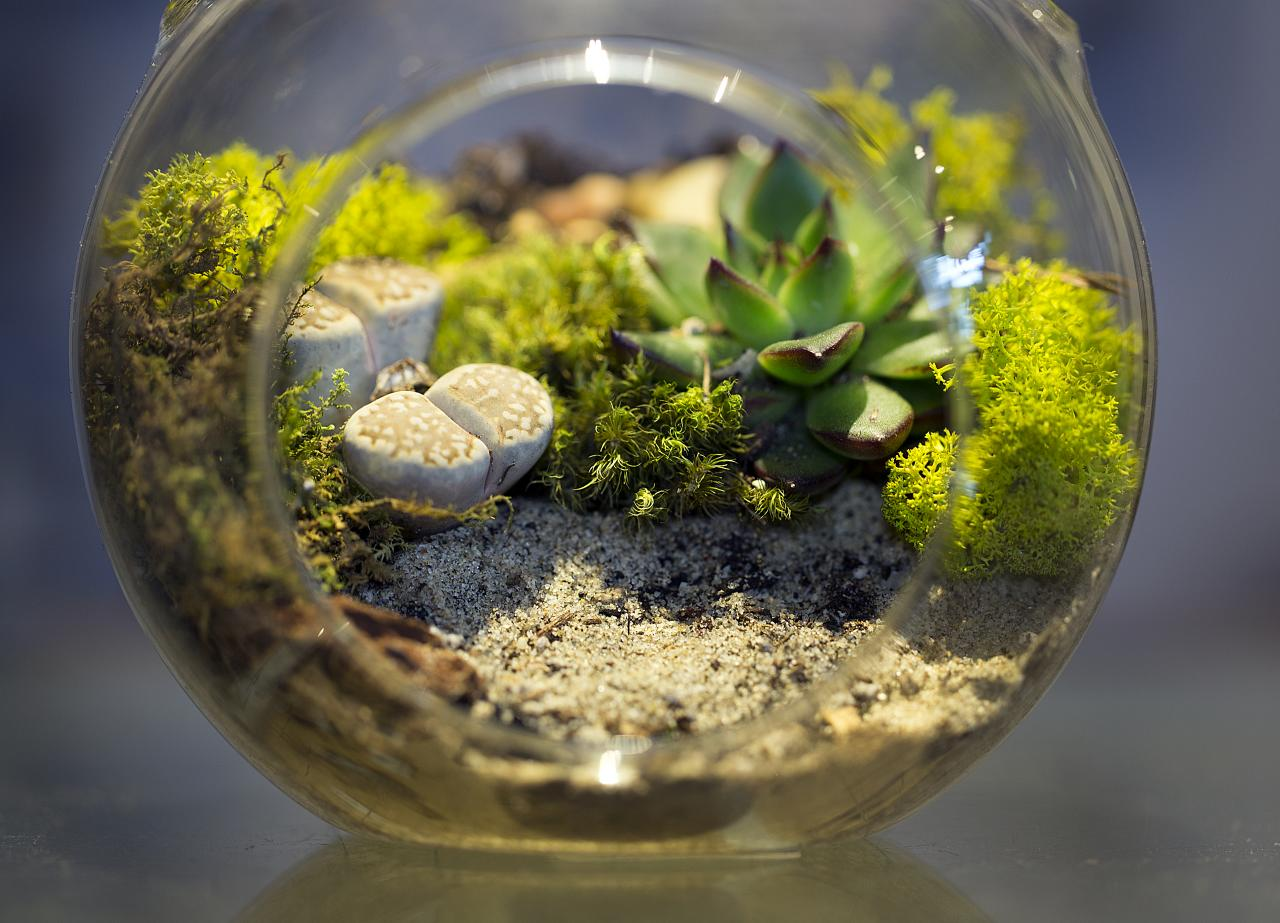How To Make And Take Care Of Your Own Terrarium