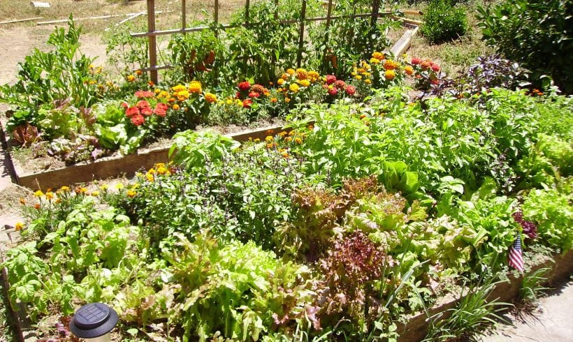 Accessible Gardens Make Gardening A Universal Hobby For All