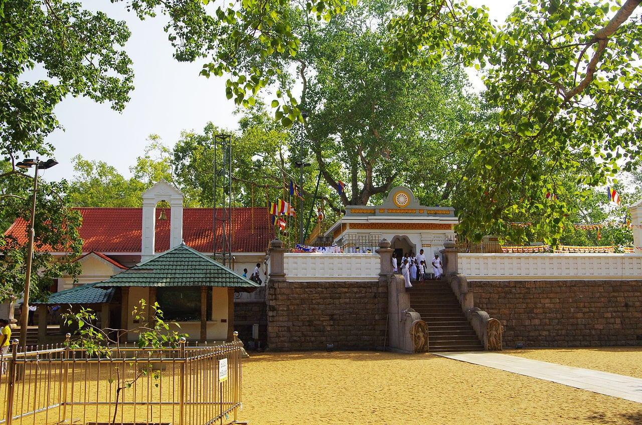 anuradhapura bodhi by Balou46 Wikimedia Commons
