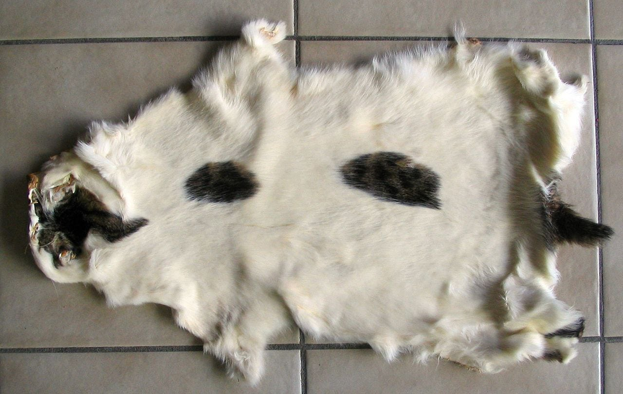 domestic cat fur