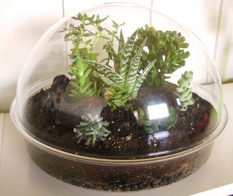 closed terrarium (Wikimedia Commons)